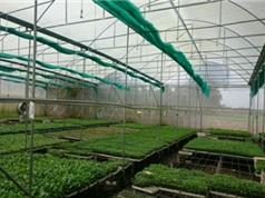 An Giang ứng dụng công nghệ cao trong sản xuất cây giống rau