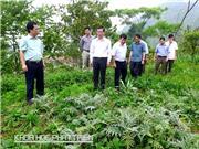 Hà Giang kiến nghị phát triển nguồn dược liệu