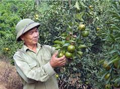 Điều kiện khí hậu thích hợp để trồng quýt Bắc Kạn