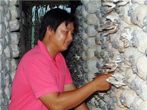 Khởi nghiệp với mô hình trồng nấm bào ngư sạch