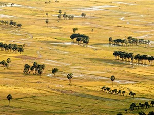 Vì sao vùng Bảy Núi phù hợp với cây lúa nàng Nhen thơm?