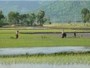 """Lịch sử hình thành """"gạo nàng Nhen thơm Bảy Núi"""""""