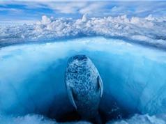 """10 bức ảnh """"cực độc"""" về những vùng đất băng giá vĩnh cửu"""