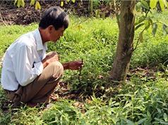 Kỹ thuật khống chế bệnh trên cây mãng cầu xiêm