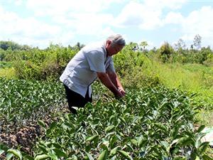 Châu Thành xây dựng vùng chuyên canh chanh không hạt