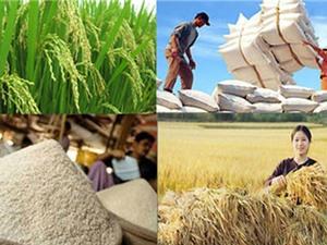 Các công đoạn sản xuất lúa Nàng Nhen Thơm Bảy Núi