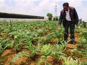 Trại Mát sản xuất nông nghiệp theo quy trình VietGAP