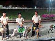 Hào hứng xem những chó chuyên nghiệp tiêu chuẩn quốc tế tranh tài