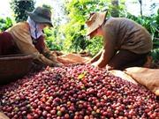 Ảnh hưởng của yếu tố con người đến chất lượng cà phê Buôn Ma Thuột