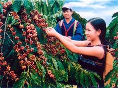 Ảnh hưởng của yếu tố tự nhiên đến chất lượng cà phê Buôn Ma Thuột