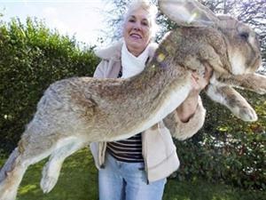 Thỏ khổng lồ chết trên máy bay United Airlines có thể do căng thẳng