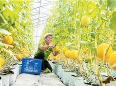 Đồng bằng sông Cửu Long hướng đến nền nông nghiệp hữu cơ