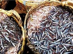 Nguyên liệu thô để sản xuất nước mắm Phan Thiết