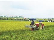 Ông Trần Văn Quang - Phó Vụ trưởng  Vụ Phát triển KH&CN địa phương: Mối liên kết 4 nhà đã hình thành ở ĐBSH