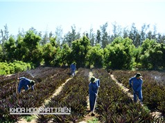 Ông Trần Bình Duyên - Tổng Giám đốc Công ty cổ phần dược liệu Việt Nam: Cần quy hoạch phát triển từng vùng với từng loại cây