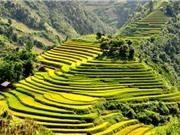 Ảnh hưởng của điều kiện khí hậu tới gạo Điện Biên