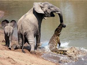 Clip: 5 tình huống săn mồi kinh dị của cá sấu