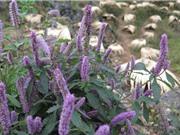 Nguồn nguyên liệu sản xuất mật ong bạc hà Mèo Vạc