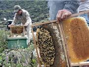 Hướng dẫn cách bảo quản mật ong bạc hà Mèo Vạc