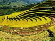 Ảnh hưởng của yếu tố con người tới chất lượng gạo Điện Biên