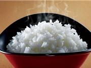 Đặc tính gạo Tám xoan Hải Hậu