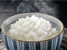 Đặc tính giống gạo Tám xoan Hải Hậu