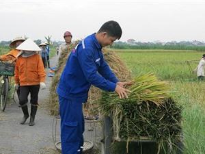 Công đoạn thu hoạch, bảo quản và chế biến lúa Một bụi đỏ Hồng Dân