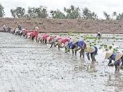 Công đoạn chọn giống và gieo sạ lúa Một bụi đỏ Hồng Dân