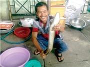 Gia Lai: Săn 'cá ma' vùng hồ Ayun Hạ