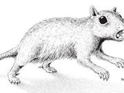 Phát hiện khảo cổ về loài động vật có vú có nọc độc ở 2 chân sau