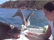 """Clip: Hải cẩu tinh ranh, """"vòi quà"""" với cặp đôi mới cưới"""