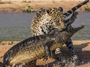 Clip: Top 5 pha chạm trán chết chóc của cá sấu