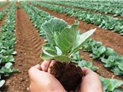 Sản xuất thực phẩm hữu cơ: Không chỉ phục vụ chuyện ăn uống