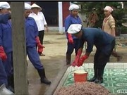 Nguyên liệu sản xuất mắm tôm Hậu Lộc