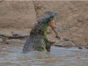 Bất cẩn, linh dương chết thảm dưới hàm răng sắc nhọn của cá sấu