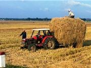 Giá rơm tăng, nông dân có thêm thu nhập