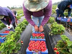Điểm mạnh và yếu của nông nghiệp hữu cơ