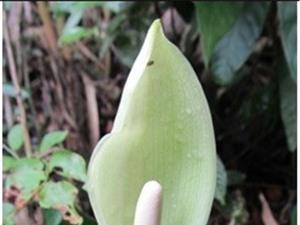 Phát hiện một loài thực vật chưa được biết