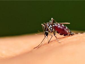 Chuyên gia kể chuyện nghiên cứu muỗi truyền bệnh sốt rét