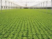 Những mô hình nông nghiệp công nghệ cao ấn tượng