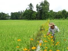 An Giang: Công nghệ sinh thái lợi đôi đường