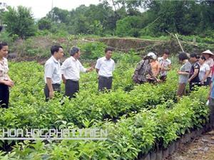 Công đoạn chọn giống, trồng và chăm sóc hồng không hạt Bảo Lâm