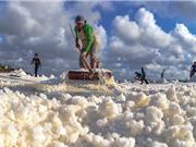 Công đoạn thu gom và bảo quản muối Bạc Liêu