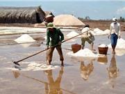 Các công đoạn sản xuất muối Bạc Liêu