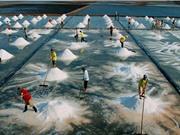 Bảo hộ chỉ dẫn địa lý Bạc Liêu cho sản phẩm muối