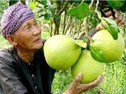 Ảnh hưởng của yếu tố con người tới chất lượng bưởi Năm Roi Bình Minh