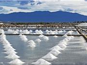 Tính chất đặc thù của muối Bạc Liêu