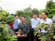 Quảng Ninh ứng dụng KH&CN phát triển dược liệu