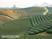 Bức tranh tổng quát về nông nghiệp hữu cơ Việt Nam