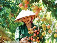 Công nghệ bảo quản rẻ đưa trái cây Việt đi xa
